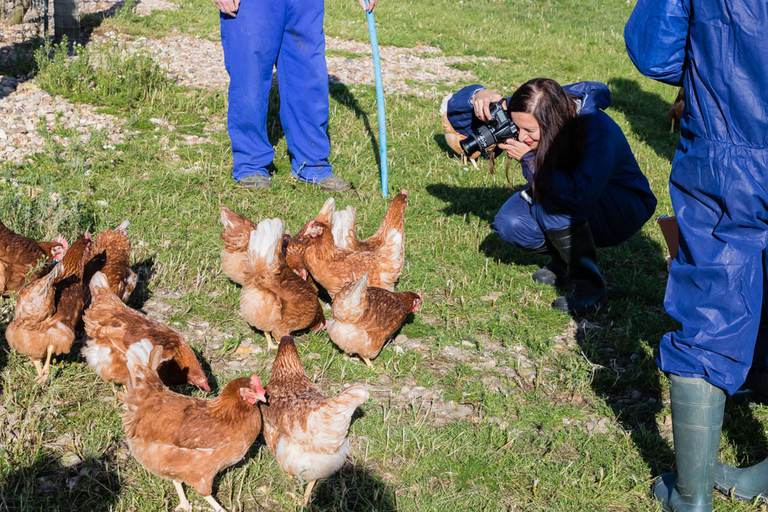 brown chickens on green grass being photographed by a woman